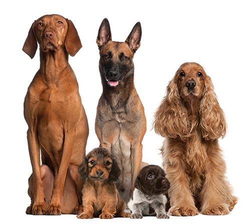 dogs-services